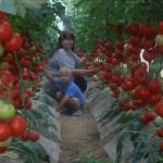 Волшебный бальзам ДЛЯ быстрого РОСТА помидорчиков
